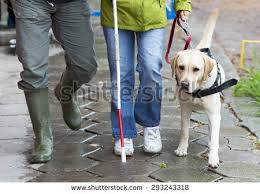 How Does A Guide Dog Help A Blind Person Blind Person Stock Images Royalty Free Images U0026 Vectors