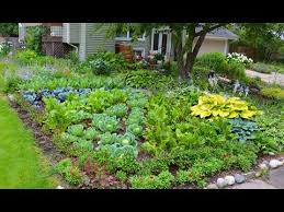 plant a front lawn ornamental edible vegetable garden