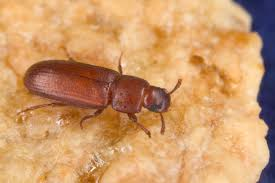 kitchen pests off topic brewerfan net