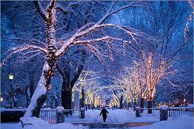 christmas lights night snow tree image 112308 on favim com