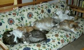gatti divani manuali impossessarsi divano nonciclopedia fandom powered