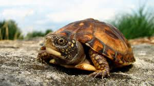 how to take care of a turtle pet turtles youtube