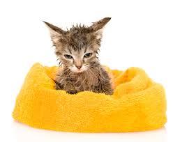 newborn kittens the cat site