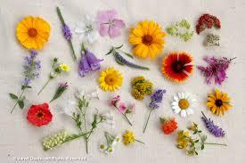 native plant sale muskoka conservancy august 2016 janet davis explores colour