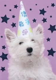 westies westie west highland white terrier west highland terrier