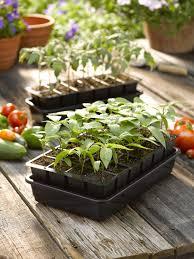 Greenhouse Starter Kits Seed Starting Growease Seed Starter Kit Dome Gardener U0027s Supply