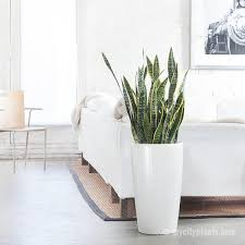 15 best low light indoor plants
