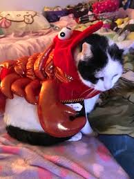 Lobster Halloween Costume Merovence Family Pet Halloween Fashion Show