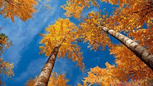 papier peint de bureau papier peint de bureau hd automne