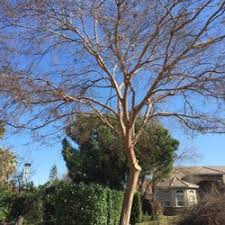 ls that look like trees arbor solutions 23 photos tree services fresno ca phone