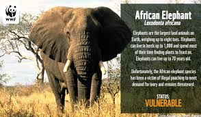 ecards world wildlife fund
