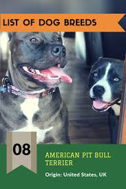 american pit bull terrier life expectancy american pit bull terrier lifespan 8 u2013 15 years common