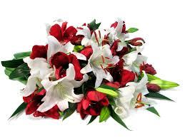 christmas flowers christmas flowers flowerbud
