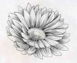 flowers pencil sketch butterfly pencil drawings pencil art drawing
