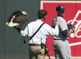 for a bald eagle mistakes paxton for a real big maple tree