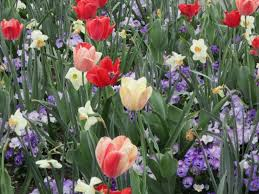 flower places flowers in northern virginia discover fairfax virginia