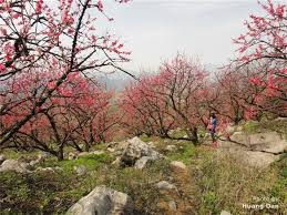 Peach Flowers Best Places To See Flowers In Beijing