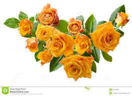 beautiful frame with bouquet of yellowish orange roses isolated on