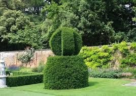 Yew Topiary - can i recommend topiary for your garden growing nicely