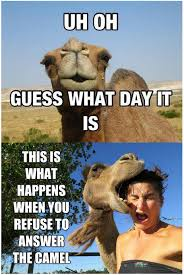 Camel Memes - hump day camel meme quotes quote days of the week wednesday hump day