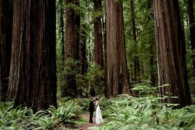 redwood forest wedding venue a living space the wedding ones venues in the redwoods