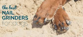 3 best dog nail grinders how to grind dog nails
