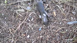 gross decapitated bunny rabbit found in back yard aliens