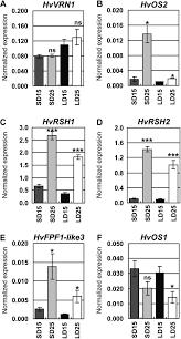 identification of high temperature responsive genes in cereals