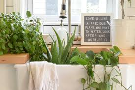 5 House Plants That Do Better Being Left Alone Nesting With Grace