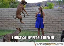 High Dog Meme - dog must go to the rescue