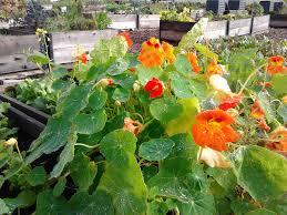 Raised Gardens You Can Make by Dunbar U0026 40th Garden Blog U2014 Shifting Growth U0027s Raised Gardens