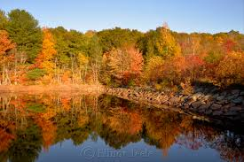 fall foliage u2013 goose cove reservoir gloucester ma 1