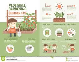 infographic how to grow vegetable beginner tips stock vector