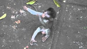 Baby Monkey Meme - baby monkey love 2 monkeys hugging youtube