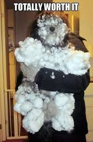 Funny Snow Memes - funny dogs in the snow top 15 pics funny pics story