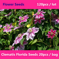 online get cheap florida landscape plants aliexpress com
