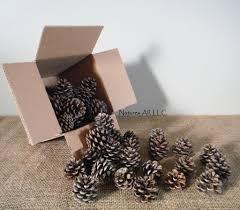 decorative natural pine cones 40 piece box fireplace decor