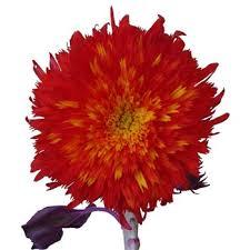 teddy sunflowers tinted teddy sunflowers