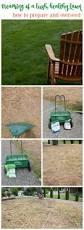 best 25 scott lawn care ideas on pinterest scotts lawn