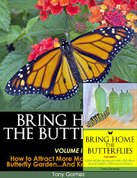 monarch butterfly kit kits to raise monarch butterflies