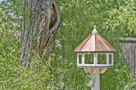 backyard birdhouse by large tree surrounded by greenery stock