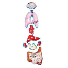 inflatable organs human body curriculum projects u0026 activities