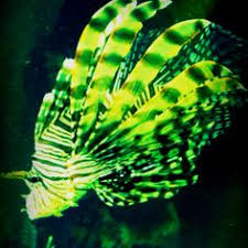 Cool Looking - here is another of the cool looking fish it was can i