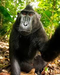 monkey selfie photographer says he u0027s broke u0027i u0027m thinking of dog