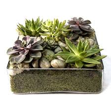 plant delivery tray flower and plant delivery nyc florist plantshed
