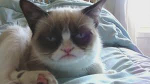 Grumpy Cat Has Died Youtube - grumpy cat tardar sauce nothing makes this cat happy not even