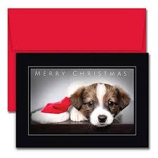 dog christmas cards cat and dog christmas card ideas