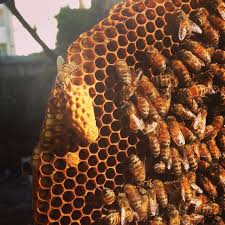 beekeeping like a signs your colony is queenless