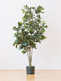Fragrant Indoor Plants Low Light - money tree care instructions will need this now that i own one