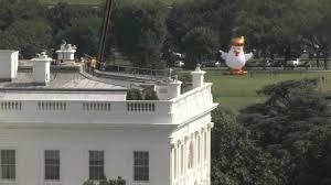 president donald trump parody u0027chicken don u0027 makes appearances
